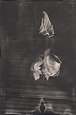 88059-Maurice_Sage_-_le_poisson_arrondira_ses_le_vres__huile_paper
