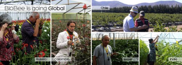 BioBee – альтернатива использованию пестицидов