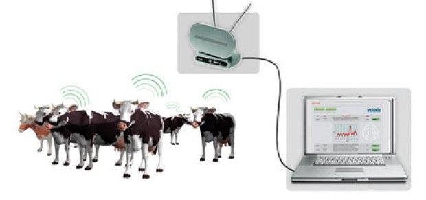 Veterix – электронная капсула для домашнего скота