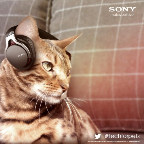 sony_cat_cans-500x500