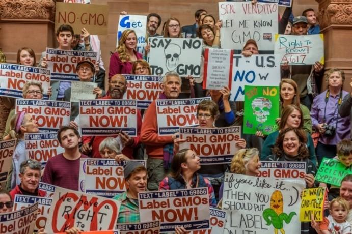 Завершено самое масштабное исследование влияния ГМО на здоровье человека