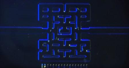 Pac-Man в пробирке или голодные игры одноклеточных