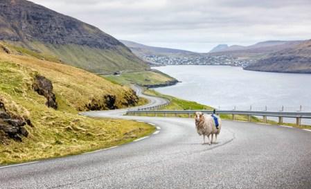«Sheep View 360»: овцы с Фарерских островов помогут снять панорамы для Google Street View