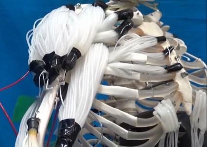 Исследователи создали искусственные нитевидные «мышцы», способные реалистично управлять человеческим скелетом
