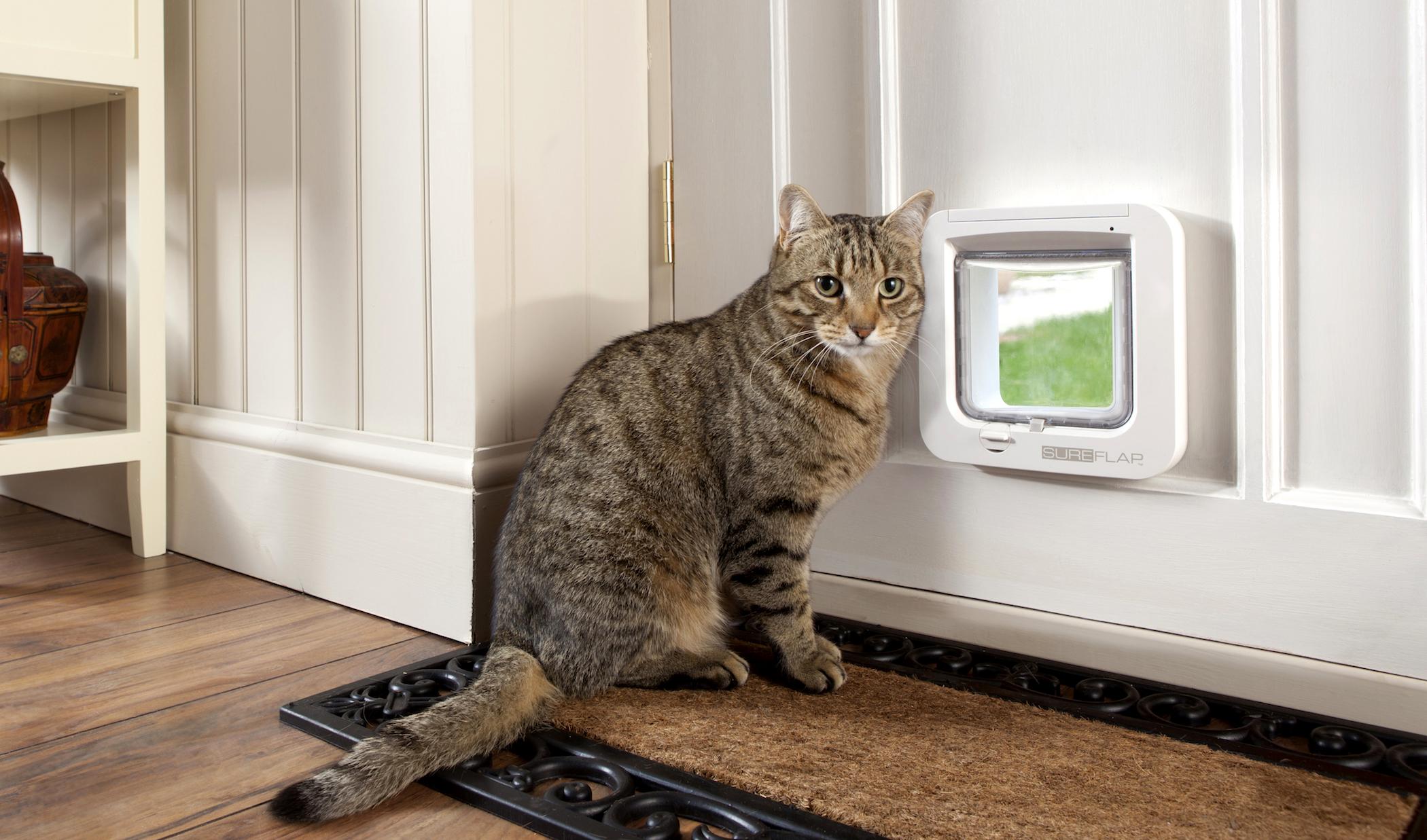 дверцы для котов