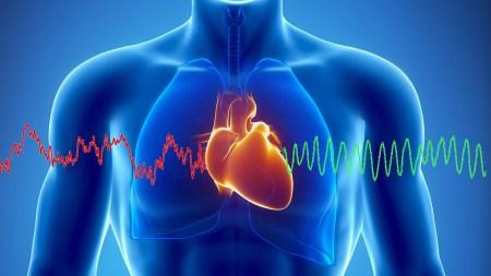 Немецкие ученые предложили использовать показания кардиостимуляторов при расследовании причин смерти