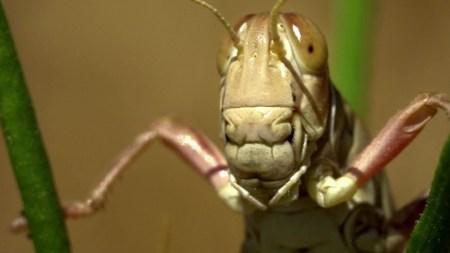 В Швейцарии узаконили пищу из насекомых