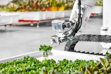 Стартап Iron Ox открыл в США инновационную роботизированную ферму