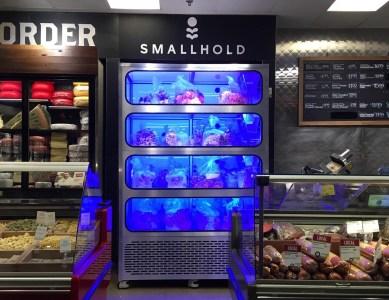 Стартап Smallhold адаптировал вертикальные фермы под выращивание грибов
