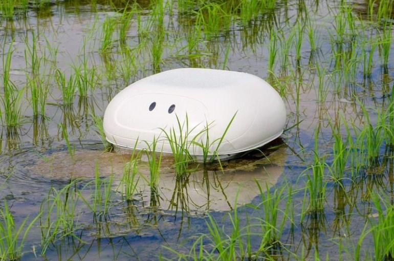 Робобаламут, созданный японским инженером из Nissan, защитит рисовые террасы от сорняков