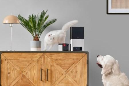 Новые умные камеры Petcube Play 2 и Petcube Bites 2 начали продаваться по цене $199