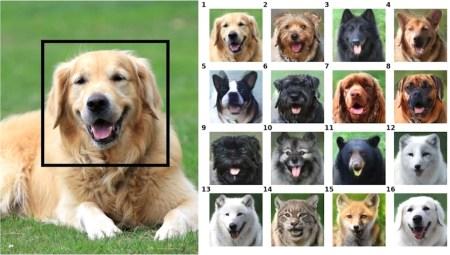 ИИ-инструмент NVIDIA GANimal может превратить вашего питомца в любое другое случайное животное