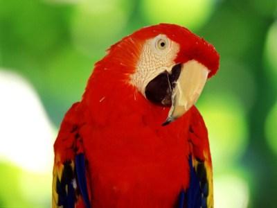 Американские инженеры разработали систему распознавания… птиц