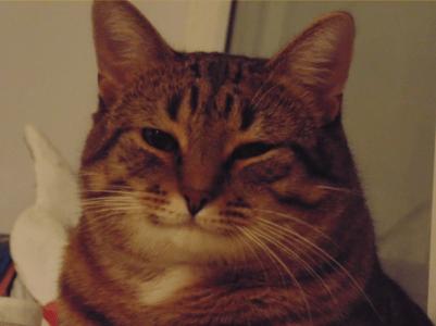 Американские ученые выяснили, что «кошачья» музыка успокаивает кошек лучше классической человеческой