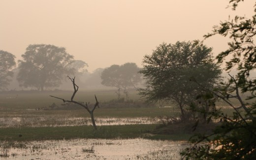 India: Bharatpur – Keoladeo National Park