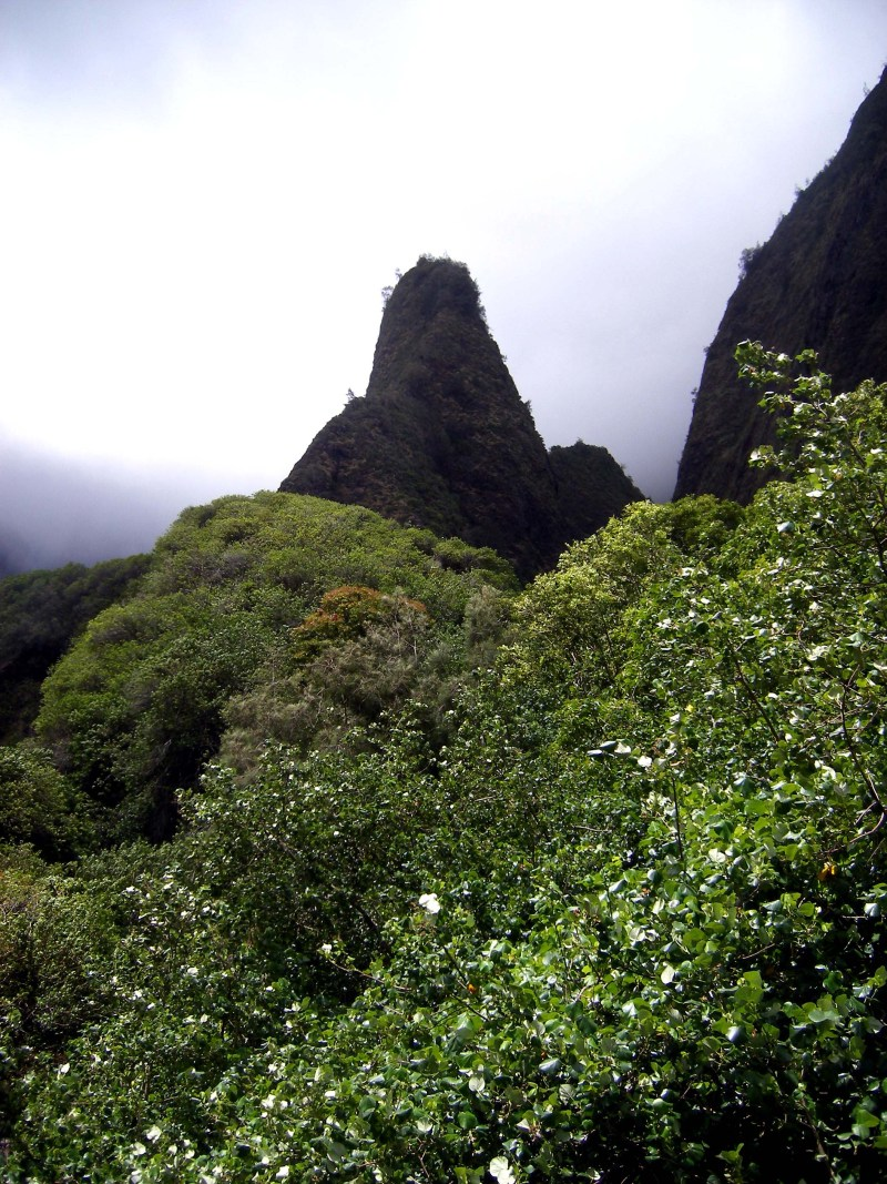 Iao_Valley_Park (4)