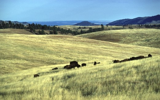 South Dakota: Wind Cave National Park