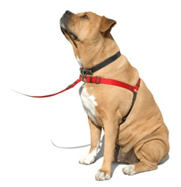 The harness that Mr Doggy ITC uses and it works well