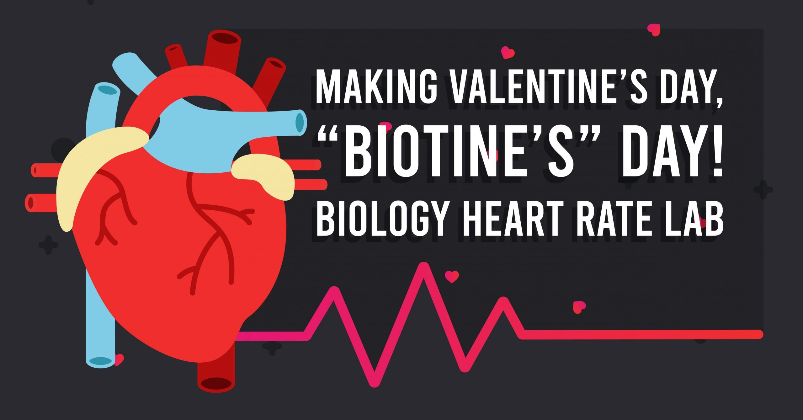 Valentine's Day Biology Activity: Making Valentine's Day Biotine's Day