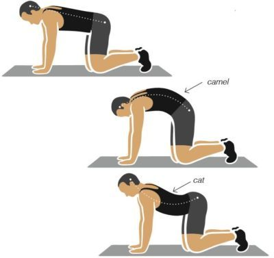 Cat and Camel Back Exercise