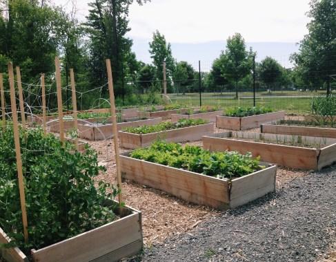 Upper garden beds 6.20