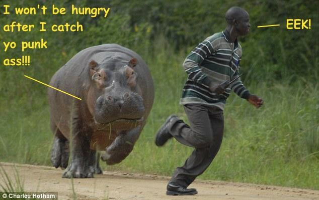 hungryhippo3