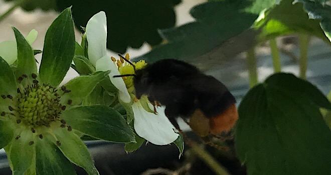 いちご狩り 蜂 子供 お出かけ 家族