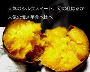 焼き芋 食べ比べ シルクスイート 紅はるか
