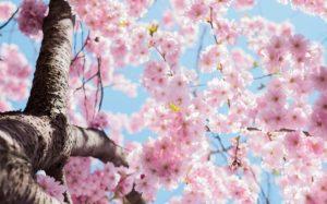 春の訪れ_いちごの杜_お花見