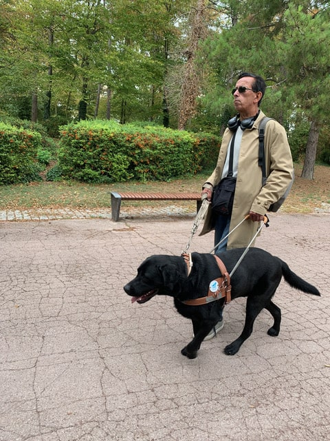 Un chien guide aide les personnes déficientes visuel à se déplacer.