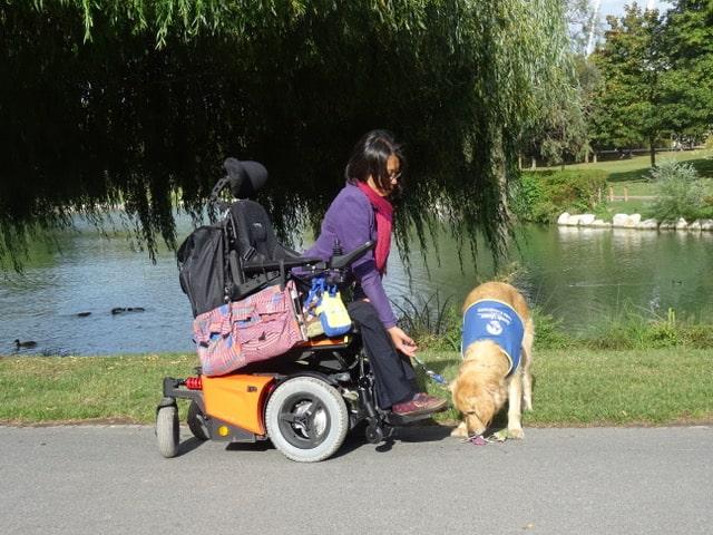 Midas est un chien d'assistance, qui aide les personnes en situation de handicap moteur