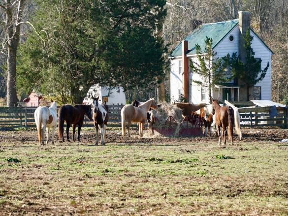 Views of the horses