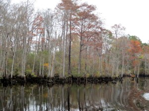 Woods along the South Carolina ICW
