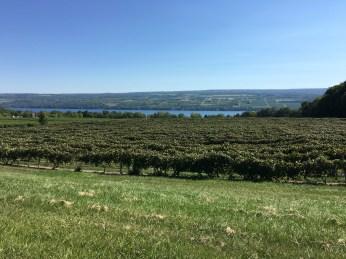 Grapes and a glimpse of Lake Seneca