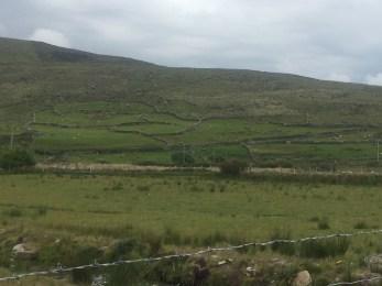 Sheep and old stone walls