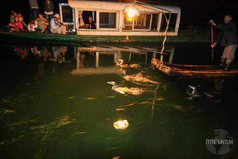 Cormorant fishing during night time