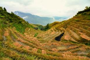 Pingan rice terraces