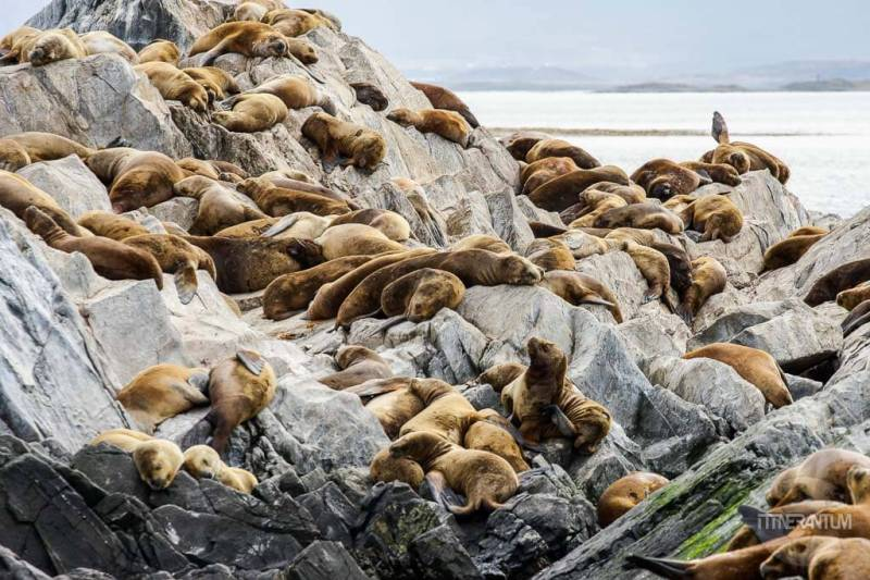 Sea lions resting on the rocks on Beagle Channel