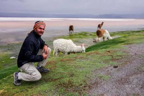 salar-de-uyuni-bolivia-lama (52)