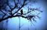 Hawk-FF