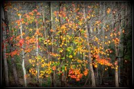 Fall Colors-FF