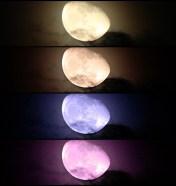 Many Moons