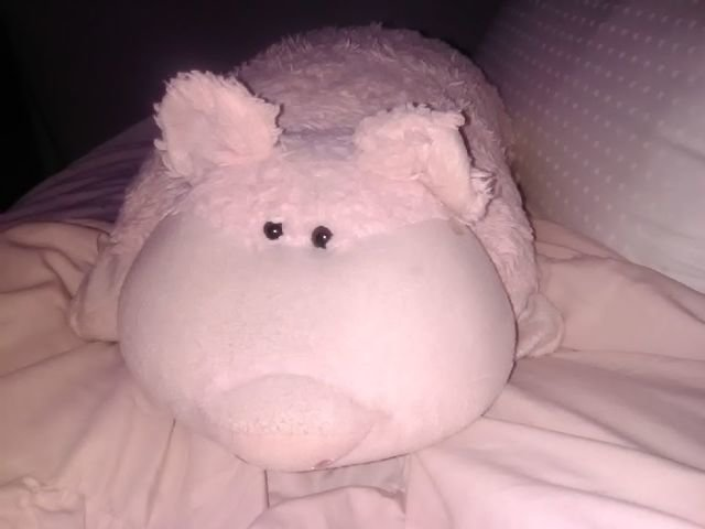 pig pillow pet cheaper than retail