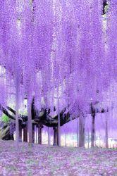 Download Beautiful Wallpaper HD Backgrounds Download itl cat