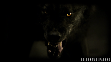 Black Wolf Wallpaper Angry Black Wolf #129875 HD Wallpaper & Backgrounds Download