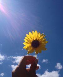 aesthetic sunflower sun wallpapers flowers cat itl long