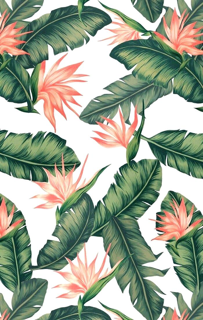 Tropical Leaves Iphone Wallpaper : tropical, leaves, iphone, wallpaper, Tropical, Leaves, Iphone, Background, (#2284732), Wallpaper, Backgrounds, Download