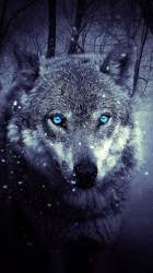 Iphone 6s Wallpapers Hd Wolf Wolf Wallpapers Wolf Wallpaper Iphone Xs Max #2848247 HD Wallpaper & Backgrounds Download
