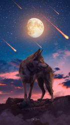 Lone Wolf Wallpaper Iphone #3166273 HD Wallpaper & Backgrounds Download
