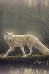 Beautiful White Wolf Wallpaper Iphone Resolution Wolf Wallpaper Iphone White #369395 HD Wallpaper & Backgrounds Download